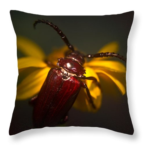 Glowing Throw Pillow featuring the photograph Glowing Beetle by Douglas Barnett