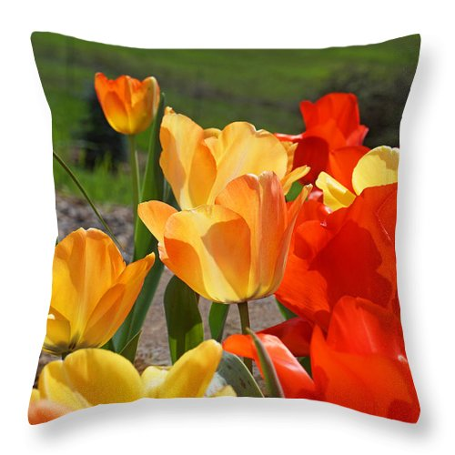 Red Throw Pillow featuring the photograph Glowing Sunlit Tulips Art Prints Red Yellow Orange by Baslee Troutman
