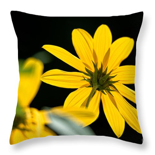 Maximilian's Sunflowers Throw Pillow featuring the photograph Glowing Yellow by Cheryl Baxter
