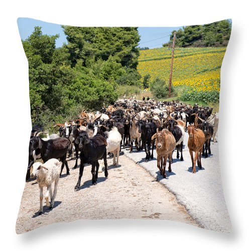 Capra Aegagrus Hircus Throw Pillow featuring the photograph Goat Herd by Roy Pedersen