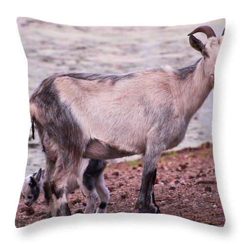 Alankomaat Throw Pillow featuring the photograph Goat by Jouko Lehto