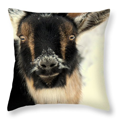 Animal Throw Pillow featuring the photograph Goatstache by Kathy Bassett