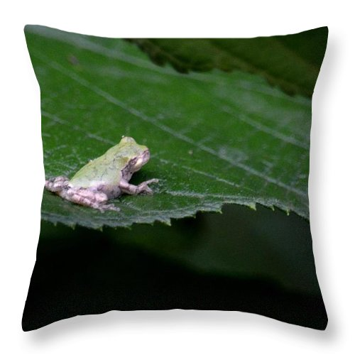 God's Tiny Tree Frog Throw Pillow featuring the photograph God's Tiny Tree Frog by Maria Urso