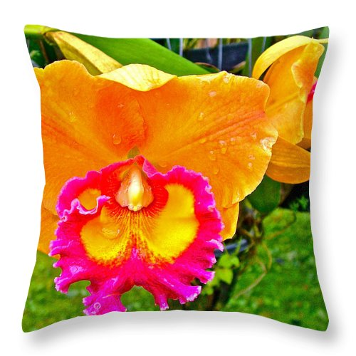 Gold And Pink Orchid At Maerim Orchid Farm In Chiang Mai Throw Pillow featuring the photograph Gold And Pink Orchid At Maerim Orchid Farm In Chiang Mai-thailan by Ruth Hager