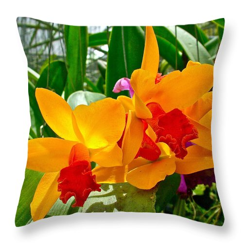 Gold And Red Orchids At Maerim Orchid Farm In Chiang Mai Throw Pillow featuring the photograph Gold And Red Orchids At Maerim Orchid Farm In Chiang Mai-thailan by Ruth Hager