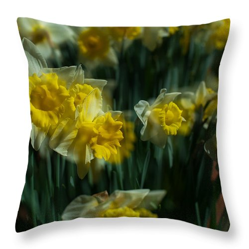 Spring Throw Pillow featuring the photograph Gold Daffodil by Catherine Lau