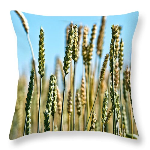 Wheat Throw Pillow featuring the photograph Gold Harvest Blue Sky by Cheryl Baxter