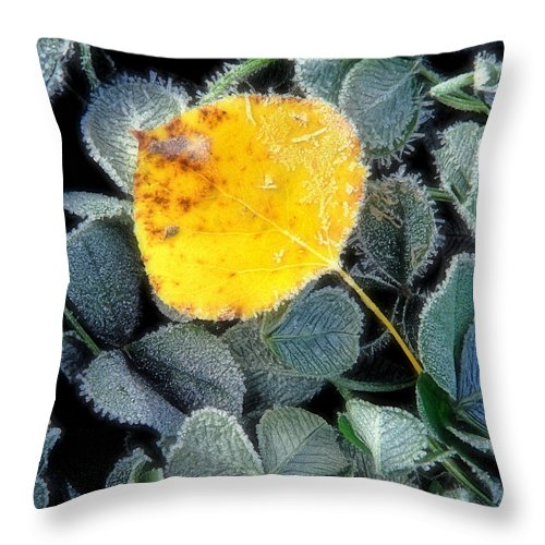 First Frost Throw Pillow featuring the photograph Gold On Green by Bill Morgenstern
