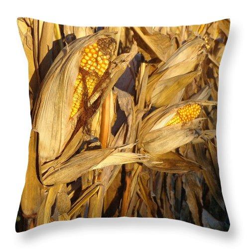 Joseph Skompski Throw Pillow featuring the photograph Golden Corn by Joseph Skompski