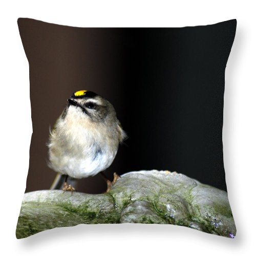 Small Bird Throw Pillow featuring the photograph Golden-crowned Kinglet by Optical Playground By MP Ray