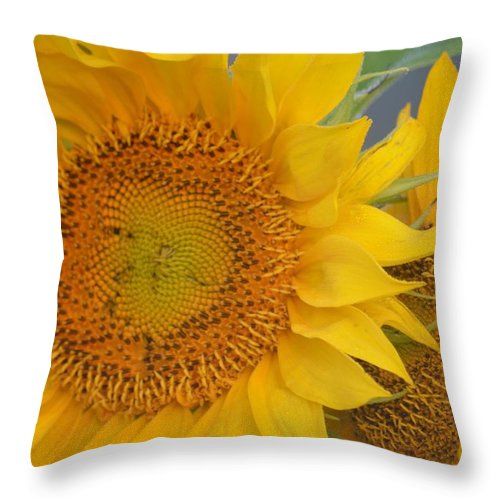 Golden Duo Throw Pillow featuring the photograph Golden Duo - Sunflowers by Maria Urso