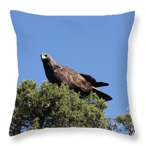 Golden Eagle Throw Pillow featuring the photograph Golden Eagle by Brandi Maher