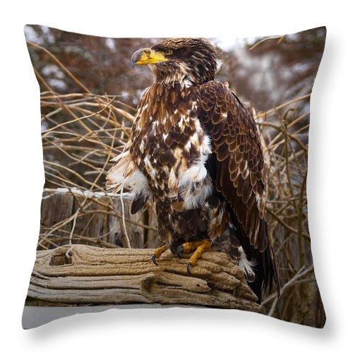 Golden Throw Pillow featuring the photograph Golden Eagle by Les Palenik