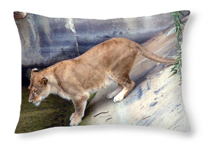Animal Throw Pillow featuring the photograph Golden Fur Lioness by Joseph Baril