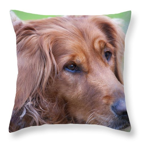 Animals Throw Pillow featuring the photograph Golden Girl by Stephen Anderson
