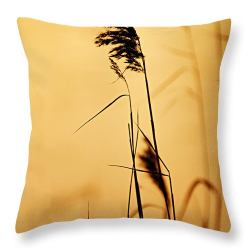 Photography Throw Pillow featuring the photograph Golden Grain Silhouette by Larry Ricker