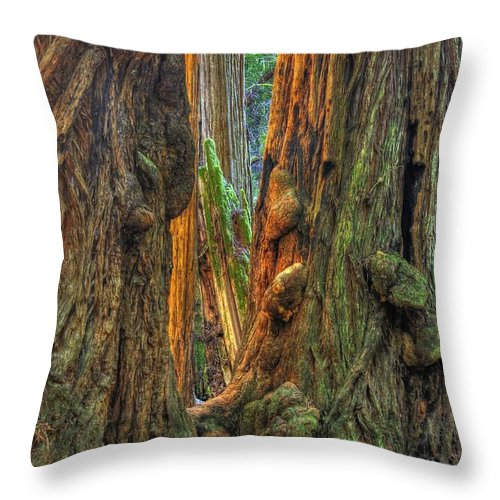 California Throw Pillow featuring the photograph Golden Light Reaches The Grove Floor Muir Woods National Monument Late Winter Early Afternoon by Michael Mazaika