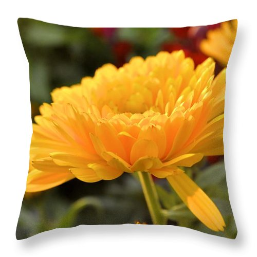 Yellow Throw Pillow featuring the photograph Golden Petals by Cathy Mahnke