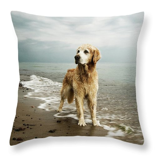 Pets Throw Pillow featuring the photograph Golden Retriever On Beach by Jutta Bauer