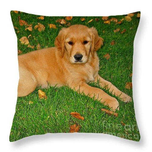 Animal Throw Pillow featuring the photograph Golden Retriever by Teresa Zieba