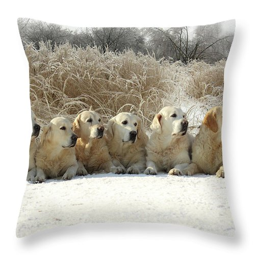 Pets Throw Pillow featuring the photograph Golden Retrievers by Sergey Ryumin