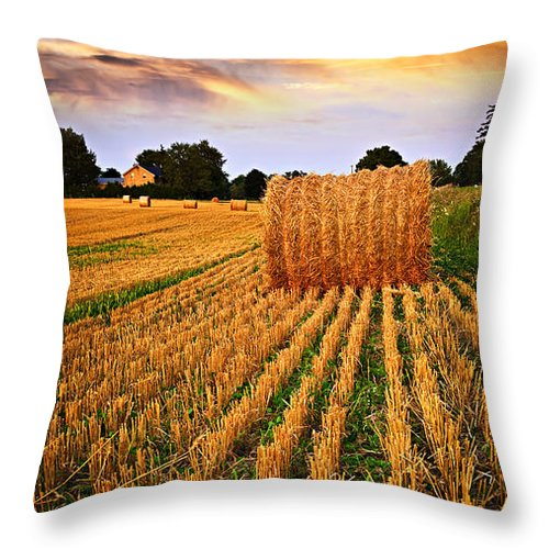 Farm Throw Pillow featuring the photograph Golden Sunset Over Farm Field In Ontario by Elena Elisseeva