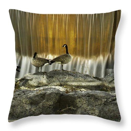 Canadian Geese Throw Pillow featuring the photograph Golden Waterfalls by Scott Moss