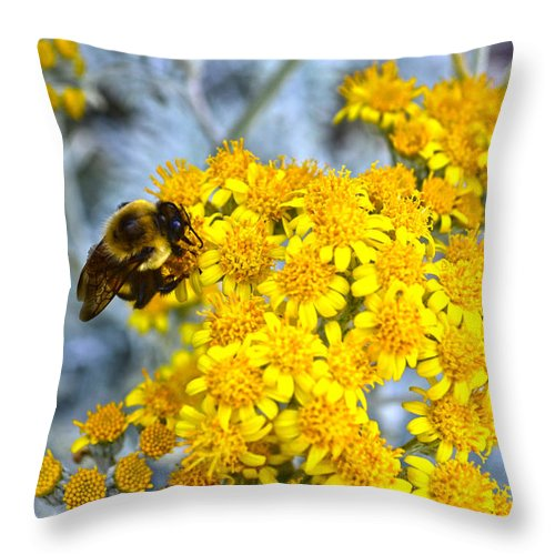 Golden Yarrow Throw Pillow featuring the photograph Golden Yarrow And Visitor by Sandi OReilly