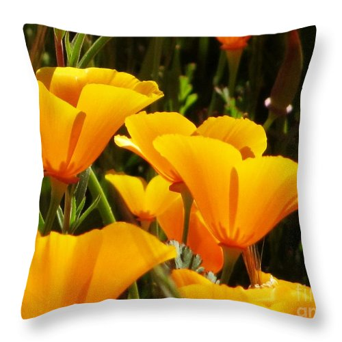 Poppies Throw Pillow featuring the photograph Golden Poppies by Sheryl Young