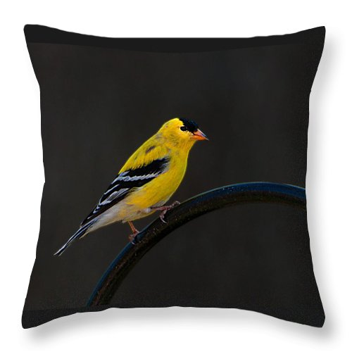 Gold Throw Pillow featuring the photograph Goldfinch 3 by Photos By Cassandra