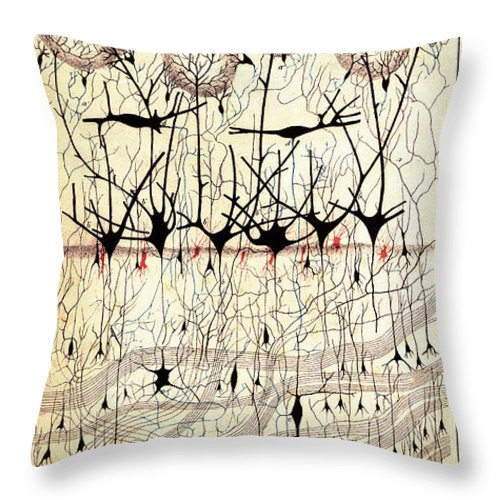 Golgi Throw Pillow featuring the photograph Golgi Olfactory Bulb Of Dog by Science Source