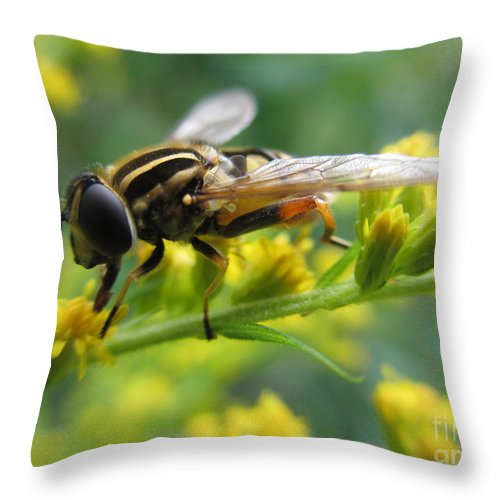 Hoverfly Throw Pillow featuring the photograph Good Guy Hoverfly by Martin Howard