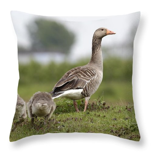 Goose Throw Pillow featuring the photograph Goose With Chicks by Ronald Jansen