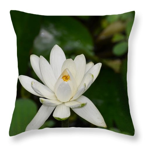 Lotus Throw Pillow featuring the photograph Gorgeous White Lotus Flower Blossom by DejaVu Designs
