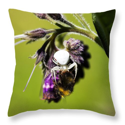 Insects Image Print Throw Pillow featuring the photograph Gotcha by David Davies