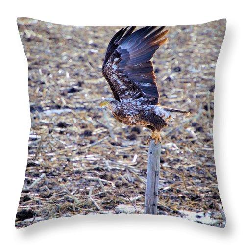 Bald Eagle Throw Pillow featuring the photograph Gotta Go by Bonfire Photography