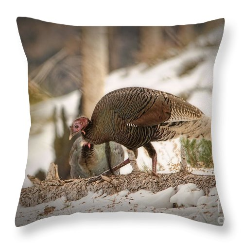 Wild Turkey Throw Pillow featuring the photograph Gould's Wild Turkey Vix by Donna Greene