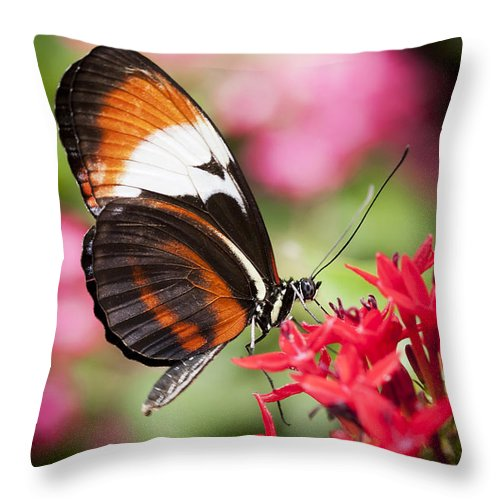 Butterfly Throw Pillow featuring the photograph Grace by Patty Colabuono