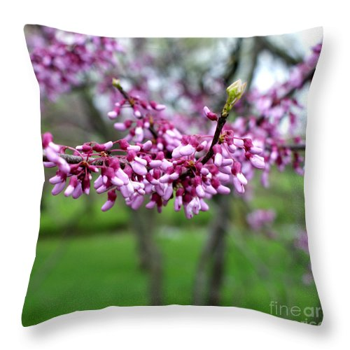 Redbud Throw Pillow featuring the photograph Grace by Valerie Fuqua