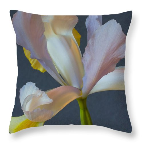 Yellow Throw Pillow featuring the photograph Graceful by Heidi Smith