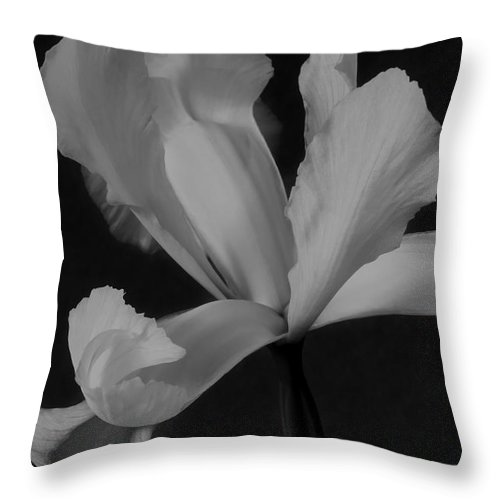 Monochrome Throw Pillow featuring the photograph Graceful In Monochrome by Heidi Smith