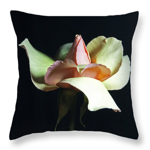 Rose Throw Pillow featuring the photograph Gracious Gratitude by Elsa Marie Santoro