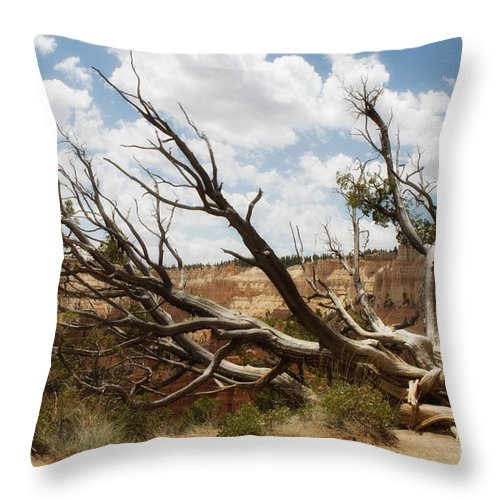 Fine Art Throw Pillow featuring the photograph Grandfather Tree by Angelique Olin