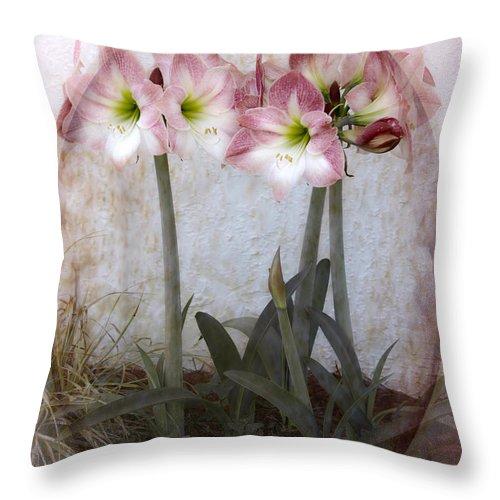 Amaryllis Throw Pillow featuring the photograph Grandmas Amaryllis Garden by Judy Hall-Folde