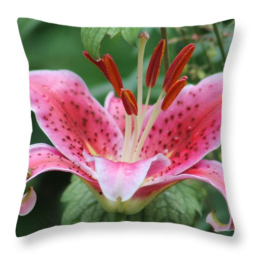 Flowers Throw Pillow featuring the photograph Grandma's Lily by G Berry
