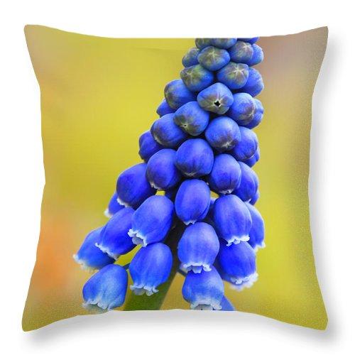Grape Hyacinth Throw Pillow featuring the photograph Grape Hyacinth by Carolyn Derstine