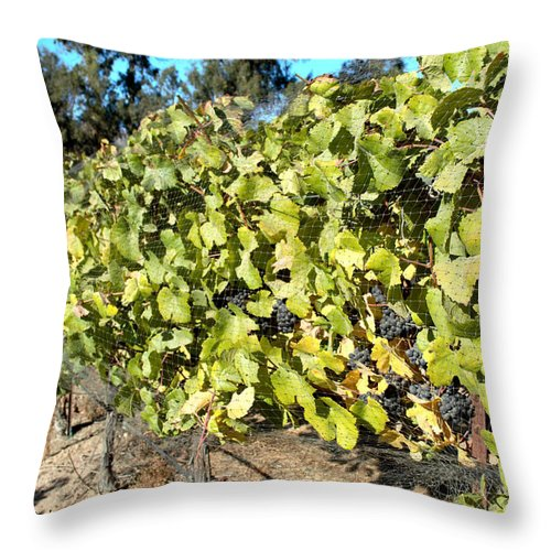 Barbara Snyder Throw Pillow featuring the digital art Grapes On The Vine by Barbara Snyder