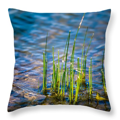 Pond Water Throw Pillow featuring the photograph Grass In The Water by Onyonet Photo Studios