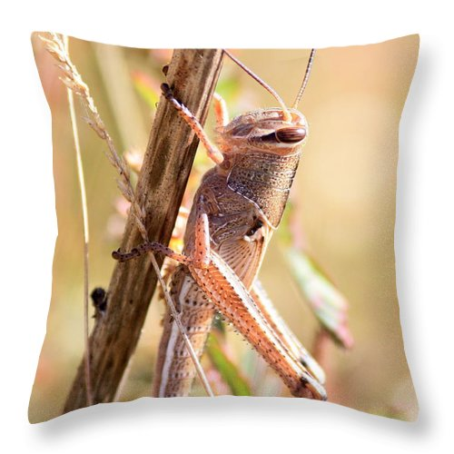 Grasshopper Throw Pillow featuring the photograph Grasshopper In The Marsh by Carol Groenen
