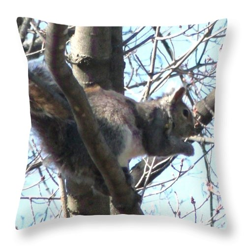 Gray Squirrel Throw Pillow featuring the photograph Gray Squirrel Nibbling by Gail Matthews
